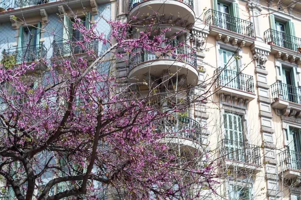 Barcelona-guide-10