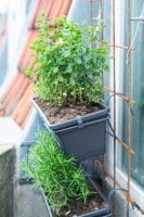 Min lille altanhave – krydderurter på altanen